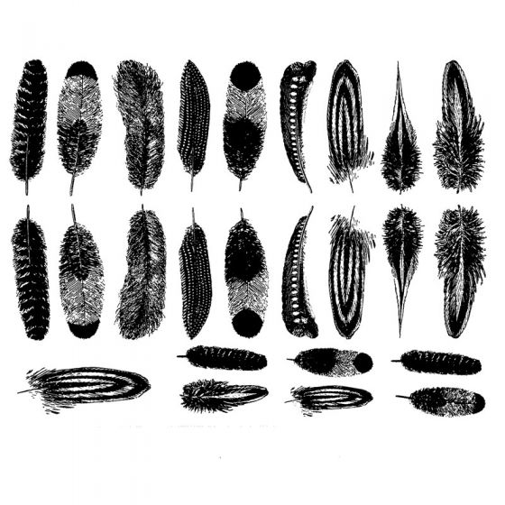 Small Feathers Decal