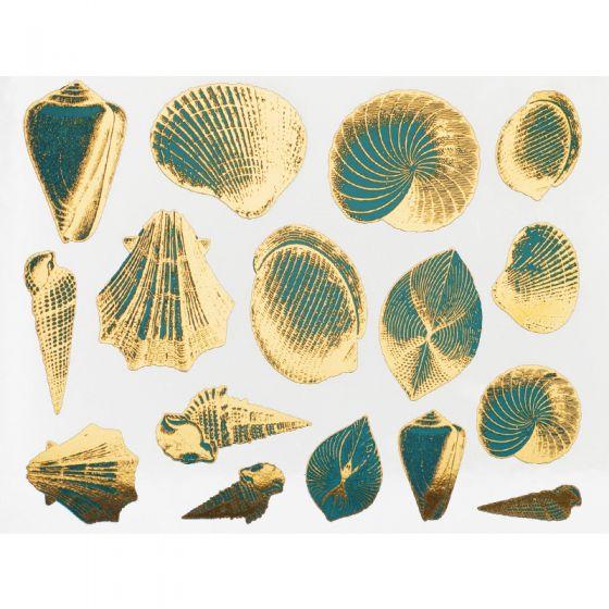 Two Colour Seashells Decal 13.3cm x 10cm